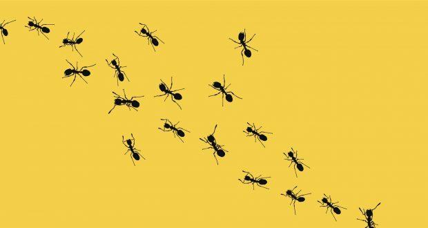 النمل يغزو الفيسبوك