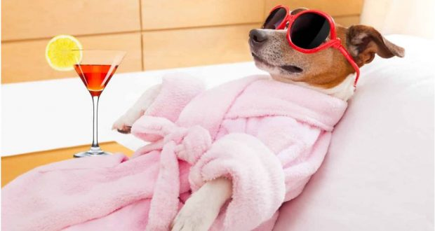 ضريبة حيازة الكلاب في ألمانيا تدر مئات الملايين على خزينة الدولة