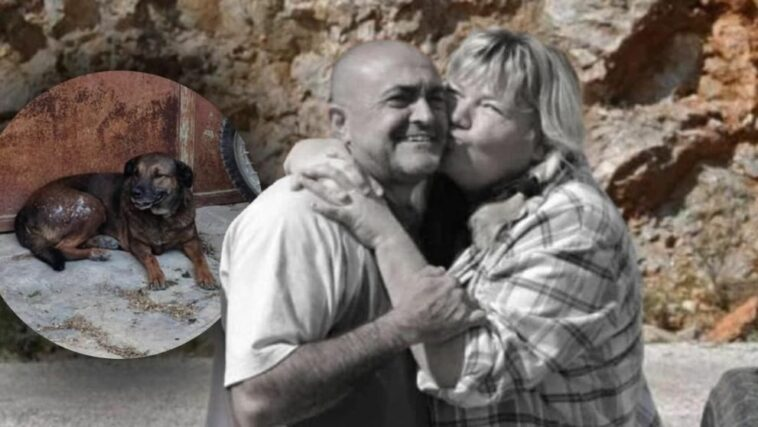 حرائق تركيا: زوجان ألمانيان يضحيان بحياتهما لإنقاذ كلابهما