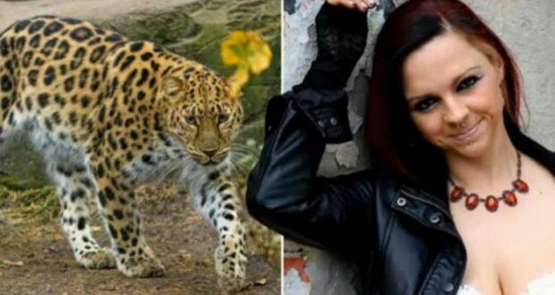 ألمانيا: نمر يهاجم عارضة أزياء خلال جلسة تصوير