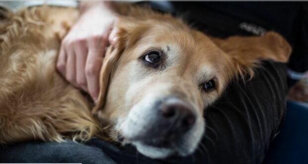 كرواتيا: القبض على سائح ألماني قتل كلبه بوحشية بواسطة مطرقة