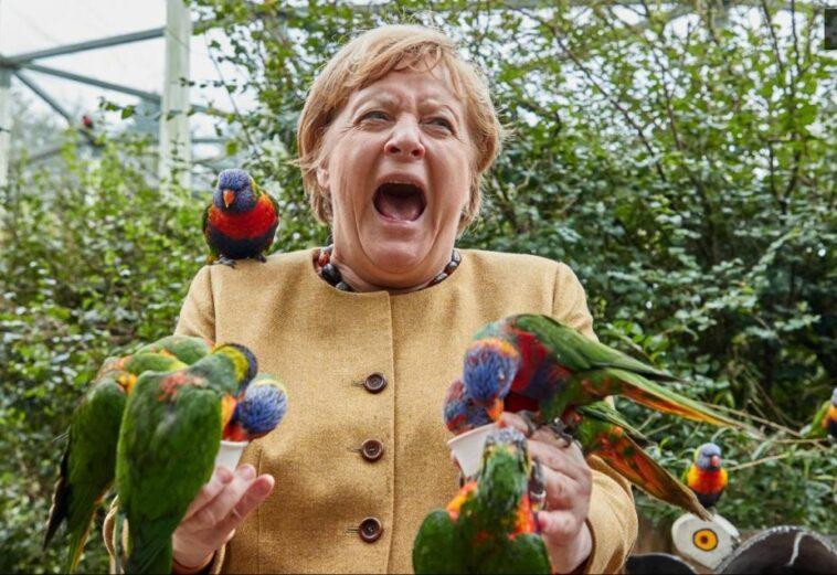 """ميركل تتلقى نقرة """"الوداع"""" من طيور دائرتها الانتخابية"""